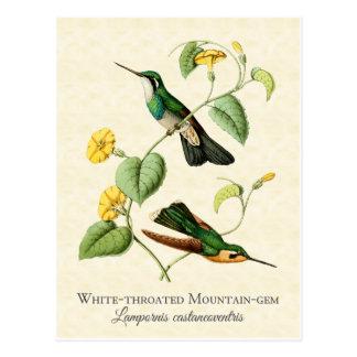 Carte postale blanche d'art de colibri de gemme de