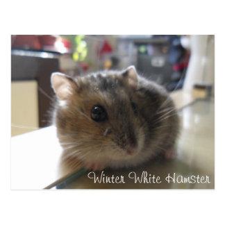 Carte postale blanche de hamster d'hiver