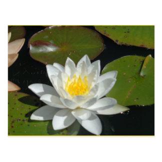 Carte postale blanche et jaune de fleur