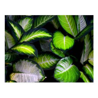 Carte postale blanche et verte de feuille