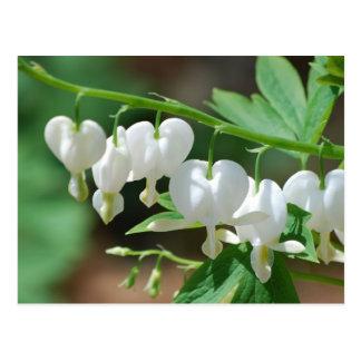 Carte postale blanche fleurissante de défenseur de