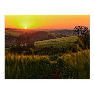 Carte Postale Blé d'agriculture de coucher du soleil