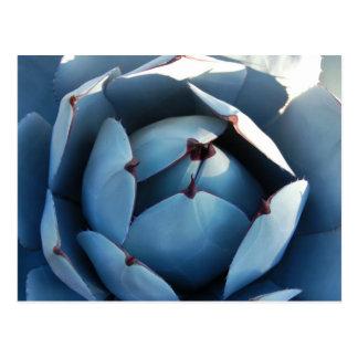 Carte postale bleue de cactus