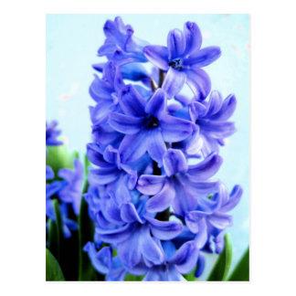 Carte postale bleue de jacinthe