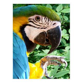 Carte postale bleue de perroquet d'ara