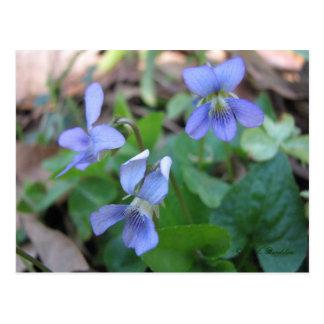 Carte postale bleue de violettes