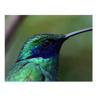 Carte postale bleue d'oiseau de ronflement
