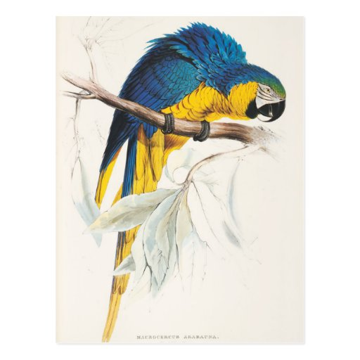 Carte postale bleue et jaune d'ara