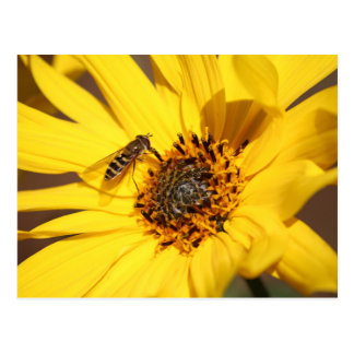 Carte Postale blomma