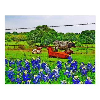 Carte Postale Bluebonnets et Longhorns, pays de colline du Texas
