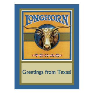 Carte Postale Boeuf Longhorn du Texas