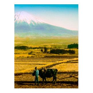 Carte Postale Boeufs d'agriculteurs labourant le champ dans