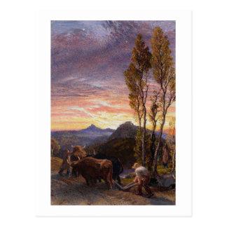 Carte Postale Boeufs labourant au coucher du soleil (la semaine