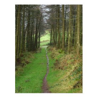 Carte Postale Bois d'Irsh