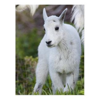 Carte Postale Bonne d'enfants de chèvre de montagne avec