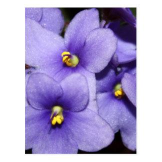 Carte Postale Boquet violet
