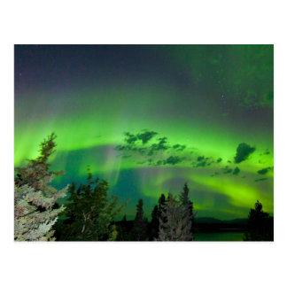 Carte Postale Borealis de l'aurore au-dessus de forêt boréale