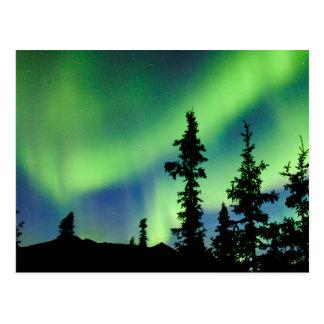 Carte Postale Borealis intenses de l'aurore au-dessus de taiga