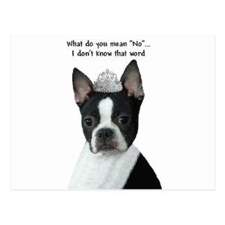 """Carte Postale Boston Terrier :  Que voulez-vous dire """"non"""" ?"""