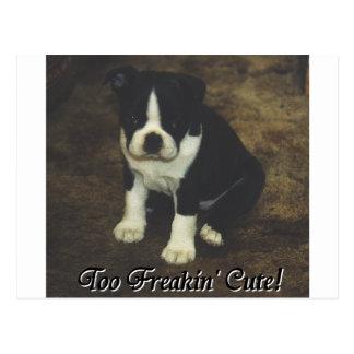 Carte Postale Boston Terrier :  Trop Freakin mignon