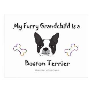 Carte Postale BostonTerrier