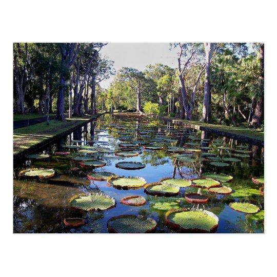 Carte Postale Botanical Garden Pamplemousses, Mauritius Island