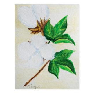 carte postale botanique de capsule de coton