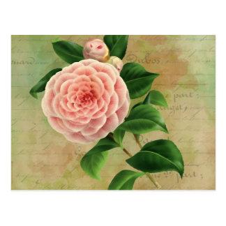 Carte Postale Botanique français de camélia vintage