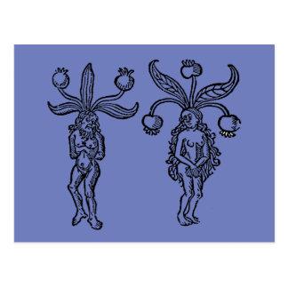 Carte Postale Botanique : Mandragore, 1476