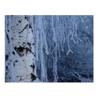Carte Postale Bouleau pleurant en hiver