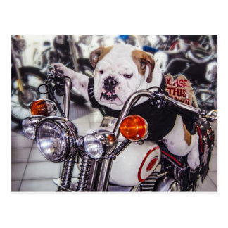 Carte Postale Bouledogue sur la moto
