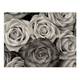 Carte Postales En Noir Blanc Zazzle Fr