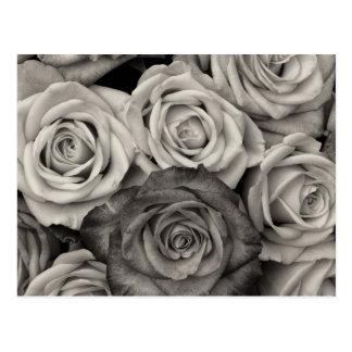 Carte Postale Bouquet assez noir et blanc de roses des fleurs