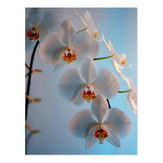 Carte Postale Branche d'orchidée