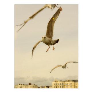 Carte Postale Brighton, Angleterre 2