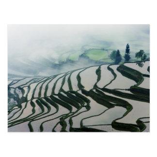 Carte Postale Brouillard de matin au-dessus des gisements de riz