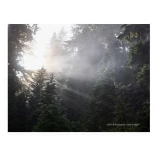 Carte Postale Brouillard et faisceaux de Sun dans une forêt de