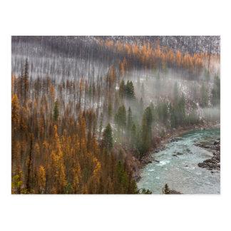 Carte Postale Brouillard Rolls dedans sur des arbres de mélèze