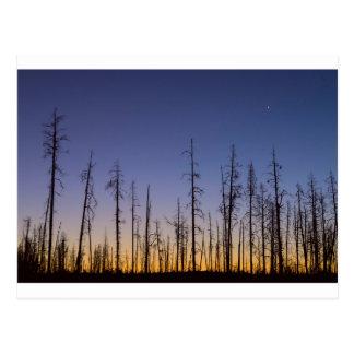 Carte Postale Brûler-Forêt