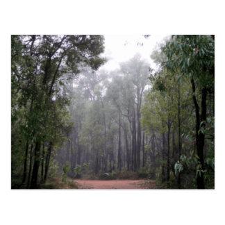 Carte Postale Brume et eucalyptus