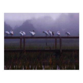 Carte postale brumeuse de matin d'île de Pawleys