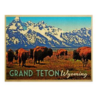 Carte Postale Buffalo grand de Teton Wyoming
