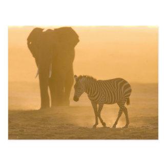 Carte Postale Burchelli de zèbre commun, d'Equus, et éléphant,