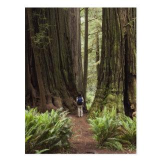 Carte Postale CA, parc d'état de séquoias de Jedediah Smith,