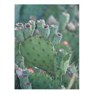 Carte Postale Cactus de palette