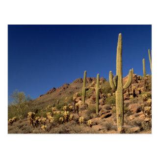 Carte Postale Cactus de Saguaro et montagnes de Tucson, Tucson