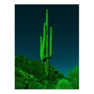 Carte Postale Cactus de vision nocturne