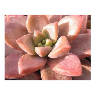 Carte Postale Cactus succulent