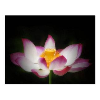 Carte Postale Cadeau de l'OM de yoga de photographie de fleur de