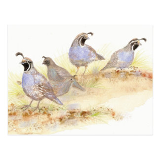 Carte Postale Cailles de Californie, oiseaux, nature, faune,